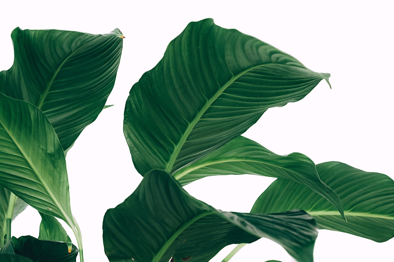 Plants & skincare - Niche Skin Labs